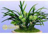 卧室绿色植物风水有哪些讲究