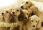 属狗的年份有哪些