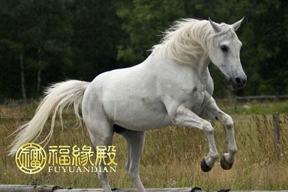 马的习性特点有哪些_属马的性格特点有哪些-福缘殿