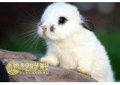 属兔人吉祥物有哪些