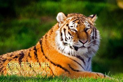 1986虎年是什么命_1986属虎的是什么命-福缘殿