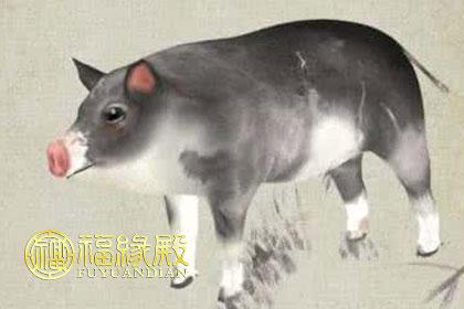 壁纸 动物 狗 狗狗 猪 420_280