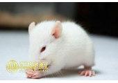 鼠年出生的人几月好