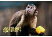 属猴的五行属什么