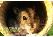 属鼠人的吉祥数字有哪些