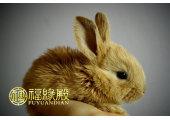 卯兔是什么意思
