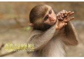 与属猴相冲的属相有哪些