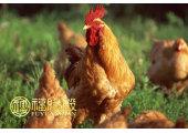 不同年份属鸡的五行是什么