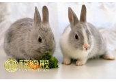 属兔人的贵人属相有哪些