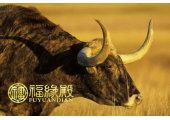 哪年属牛 属牛的性格