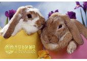 2011属兔的是什么命