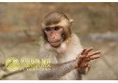 属猴的哪年出生