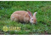 生肖属兔和什么生肖配最好