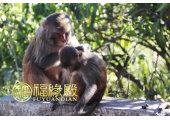 属猴的生什么宝宝好