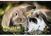属兔跟什么属相相冲
