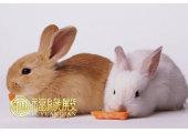 属兔和什么配最合适