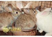 与兔相配的属相有哪些