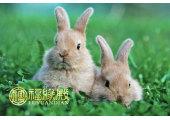 属兔和属兔的婚姻怎样