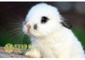 属兔和什么属相相克