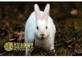 属兔的男人命好吗