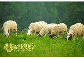 属羊时辰出生的命运