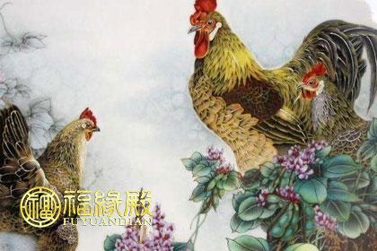 属鸡和属鸡的相配吗