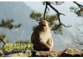 属猴几月出生最好命运