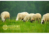 属鼠男和属羊女相配吗