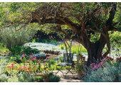 庭院种树的风水禁忌