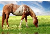 属马的名人有哪些