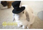 1999属兔的是什么命