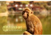 属猴哪年出生