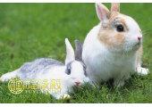 属兔人出生时辰的命运