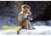 属猴的与什么属相相克