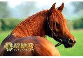 属马相冲的属相有哪些