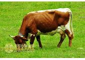 属牛和什么生肖最配