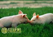 属猪和属猪的配吗