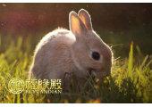 属兔的属相婚配表大全