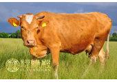 属牛几月出生好