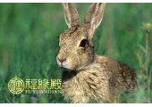 属兔的女人性格特征