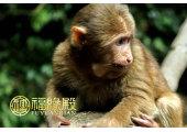 属猴的属相婚配表大全