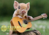 属猪时辰出生的命运