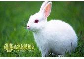 属兔时辰出生的命运