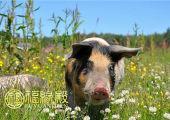 属猪的适合什么工作