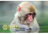 属猴的女孩性格特点