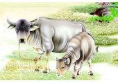 属牛什么时辰出生最好