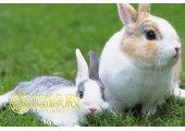 属兔几几年出生