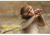属猴是哪年出生的