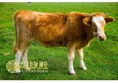 属牛的人是什么命
