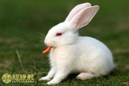 五行与生肖兔的关系,生肖兔对应的五行